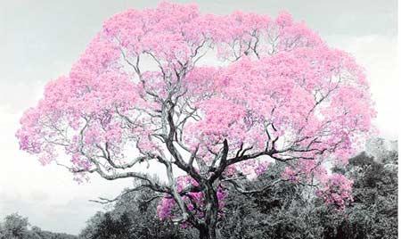 nsp муравьиное дерево